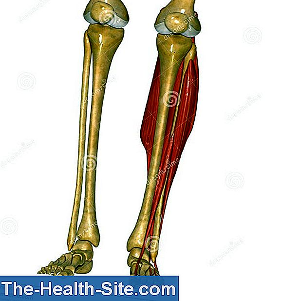 Tibia: Function, Anatomy And Diseases 💊 Scientific-Practical ...