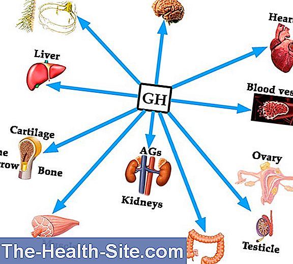 Growth Hormone (Gh, Sth) - Which Means The Laboratory Value