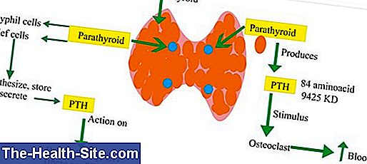 Parathyroid hormone