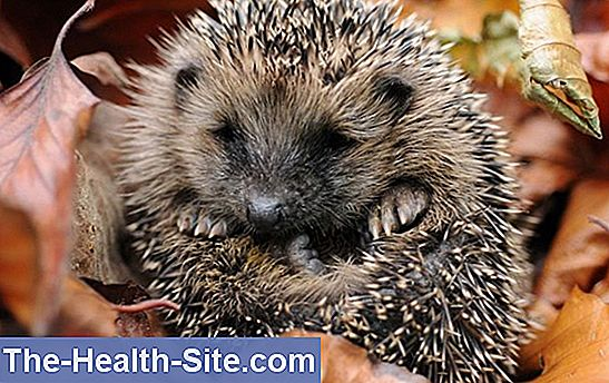 Igel from a to z