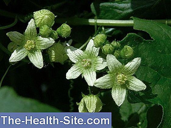 inflamația homeopatiei articulațiilor