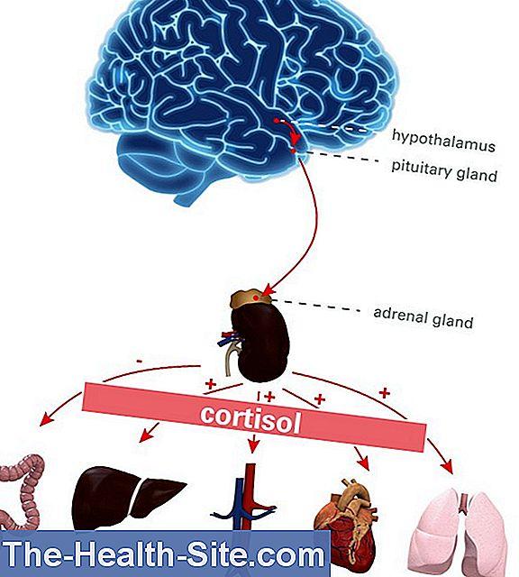 cortizol și erecție)